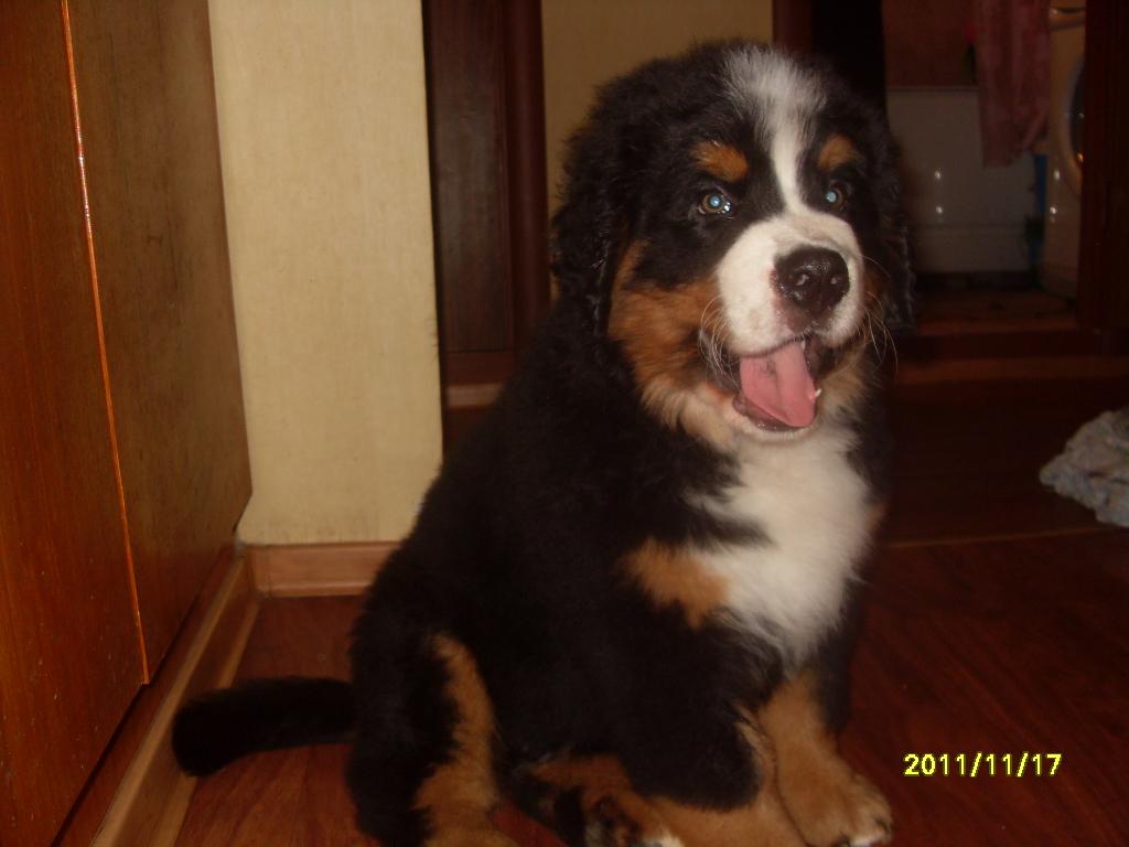 Почему щенок кусается и рычит в 2 месяца
